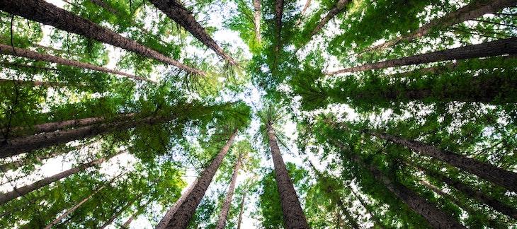 Baumkreis von unten gesehen